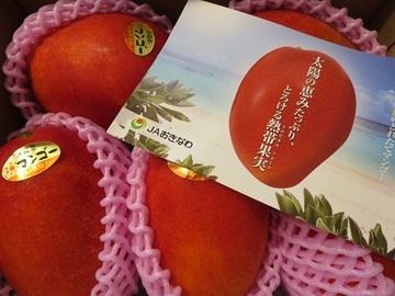 ビタミン豊富なマンゴーが沖縄からやってきました!(JAおきなわ)