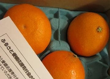紅まどんなは私にとって柑橘の女王!|【ふるさと納税】返礼品おすすめ2点