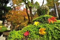 autumnal-leaves-2778843_640.jpg