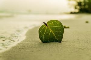 beach-394503_640.jpg