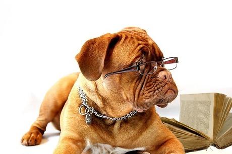 メガネの置き忘れ防止にこんな可愛らしいグッズを|50代はメガネをかけたり外したり置き忘れたり