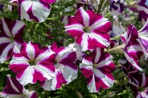 exotic-flower-2727219_640.jpg