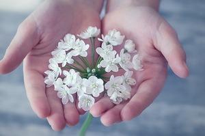 flower-1283259_640.jpg