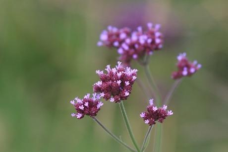 flower-1321336_640.jpg