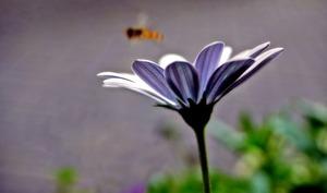 flower-2694491_640.jpg