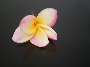 flower-3323228_640.jpg