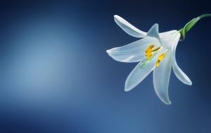 flower-729514_640.jpg