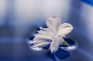 flowers-1167669_640.jpg