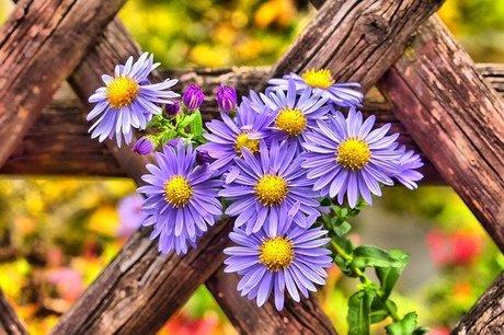 garden-3840125_640.jpg