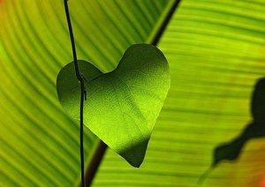 green-547400_640.jpg