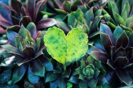 heart-5055002_640.jpg