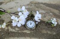 pocket-watch-1637392_640.jfif