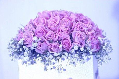 rose-3215035_640.jpg