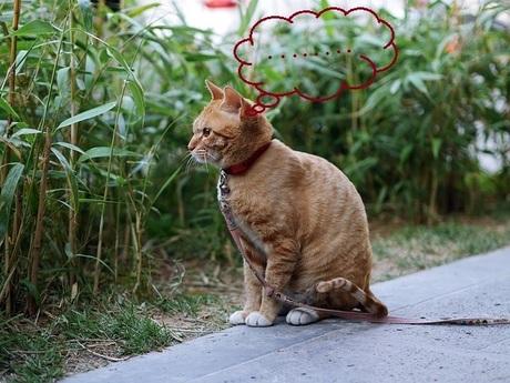 cat-360805_640-2.jpg