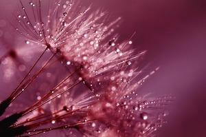 dandelion-843356_640.jpg