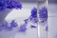 flowers-2693748_640.jpg