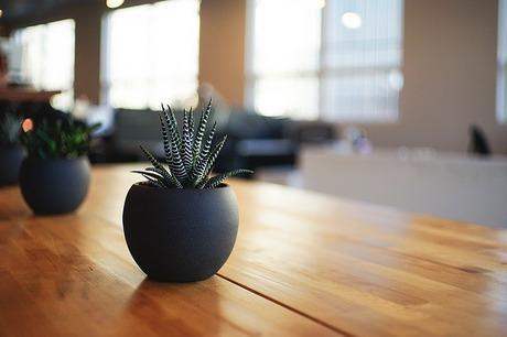 リビングにグリーンを取り入れる効果|観葉植物のあるリビング