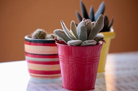 plants-2127114_640.jpg