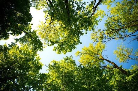 tree-3089993_640.jpg