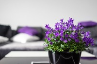 violet-2374509_640.jpg