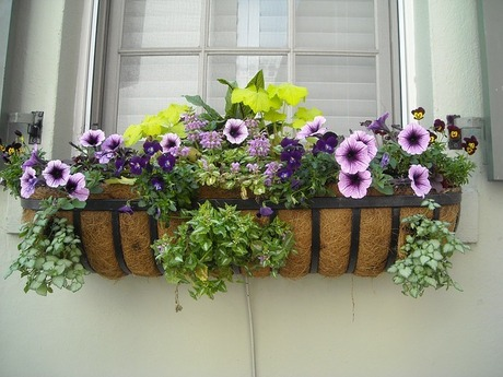 window-box-891985_640.jpg